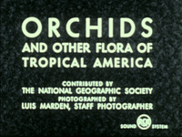 Orchids and Other Flora of Tropical America